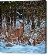 Peace Valley Park Deer Canvas Print