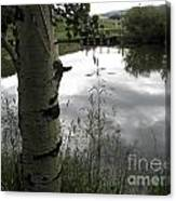 Peaceful Aspen With Pond And Clouds Canvas Print