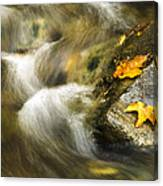 Peaceful Creek Canvas Print