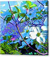 Peaceful Dogwood Spring Canvas Print