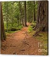 Peaceful Path To Cheakamus Lake Canvas Print