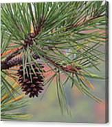 Peaceful Pinecone Canvas Print