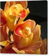 Peach Cymbidium Orchid Canvas Print