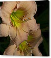 Peach Parfait Daylilies Canvas Print