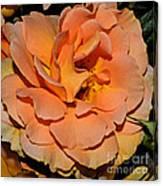 Peach Rose - Digital Paint Canvas Print
