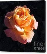 Peach Rose Palm Desert Canvas Print