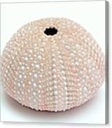 Peach Sea Urchin White Canvas Print