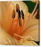 Peach Suprise Canvas Print