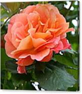 Peachy Elegance Canvas Print
