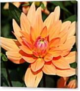 Peachy Petals Canvas Print