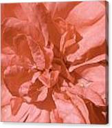 Peachy Pink Jasper Rose Canvas Print