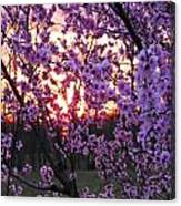 Peachy Sunset 1 Canvas Print