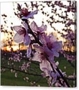 Peachy Sunset 2014 #2 Canvas Print
