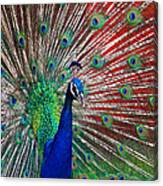 Peacock And Red Barn Canvas Print