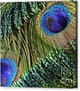 Peacock Eye And Sword Canvas Print