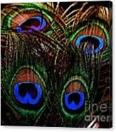 Peacock Eye Feathers Canvas Print