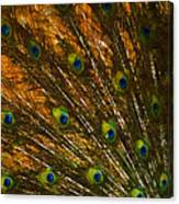 Peacock Feathers 2 Canvas Print