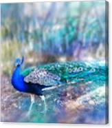 Peacock In The Mist Canvas Print