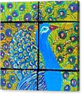 Peacock Ix Canvas Print