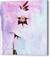 Peacock Orchids Canvas Print