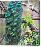 Peacock Perching On A Branch, Kanha Canvas Print