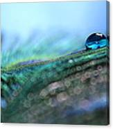 Peacock Tear Canvas Print