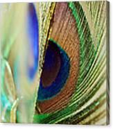 Peacocks Dance The Samba Canvas Print