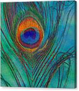 Peacock's Gift 2 Canvas Print