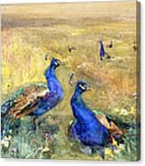 Peacocks In A Field Canvas Print