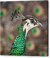 Peahen And Peacock Canvas Print