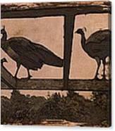 Peahens Canvas Print
