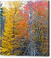 Peak And Past Foliage Canvas Print
