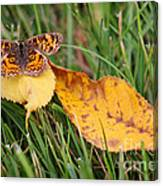 Pearl Crescent Butterfly On Yellow Leaf Canvas Print