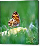 Pearl Crescent Butterfly Square Grass Canvas Print