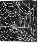 Pearl Web Canvas Print