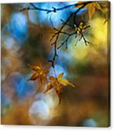Pearlescent Acers Canvas Print