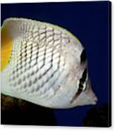 Pearlscale Or Yellow-tailed Butterflyfish Canvas Print