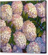 Peegee Hydrangeas Canvas Print