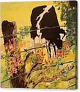 Peek A Moo Canvas Print