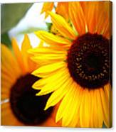 Peekaboo Sunflowers Canvas Print