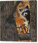 Peeking Bandit Canvas Print