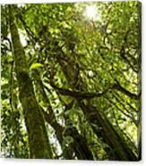 Peeking In Costa Rica Rain Forest Canvas Print