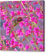 Peeking Through The Pink Penstemons Canvas Print