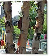 Peeling Bark Canvas Print