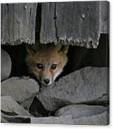 Peeping Fox Canvas Print