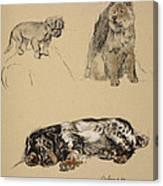 Pekinese, Chow And Spaniel, 1930 Canvas Print