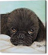 Buddy The Pekingese Canvas Print