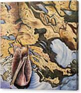 Pelican 4 Canvas Print