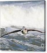 Pelican 4057 Canvas Print