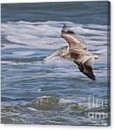 Pelican 4081 Canvas Print
